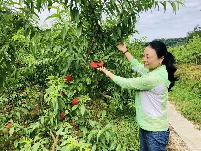 【资讯】竹溪乡村果园创造旅游效益