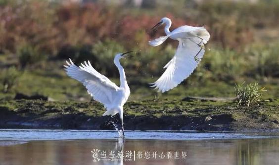【资讯】约起!去房县半岛湾看白鹭戏水!
