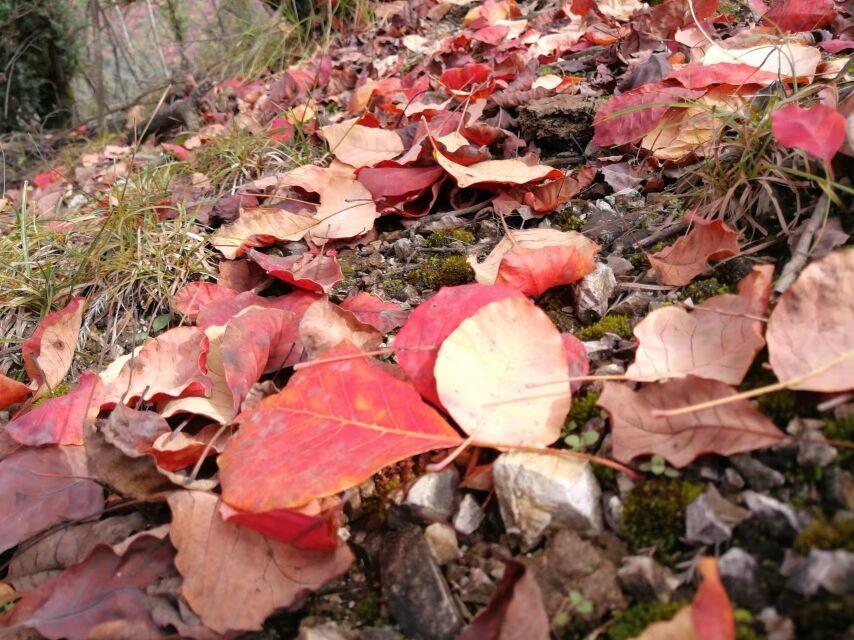 【资讯】十一赏红叶,就来神农大峡谷,门票优惠多多!