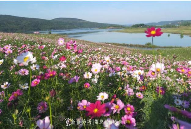【资讯】郧阳区这处景区已花开成海,国庆期间免门票
