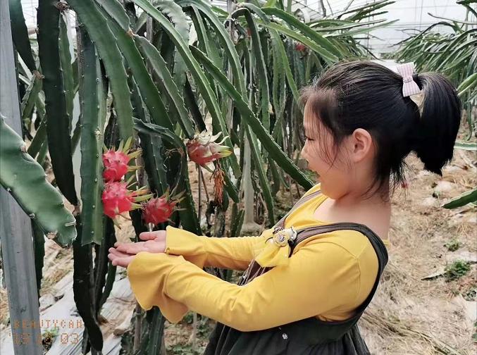 【假期动态】子胥湖欢乐农场水果多, 假期采摘最适宜