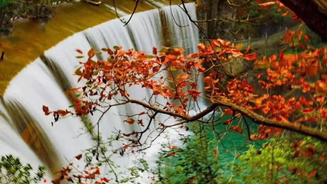 【资讯】到五龙河看红叶  景区送福利了