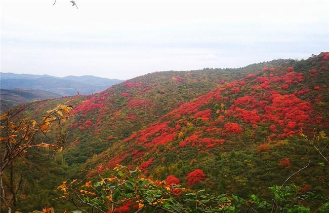【资讯】秋日登高看漫山红遍层林尽染