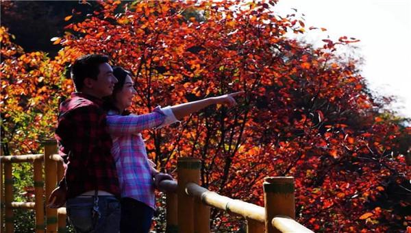 【资讯】十堰这个4A景区漫山红叶进入最佳观赏期