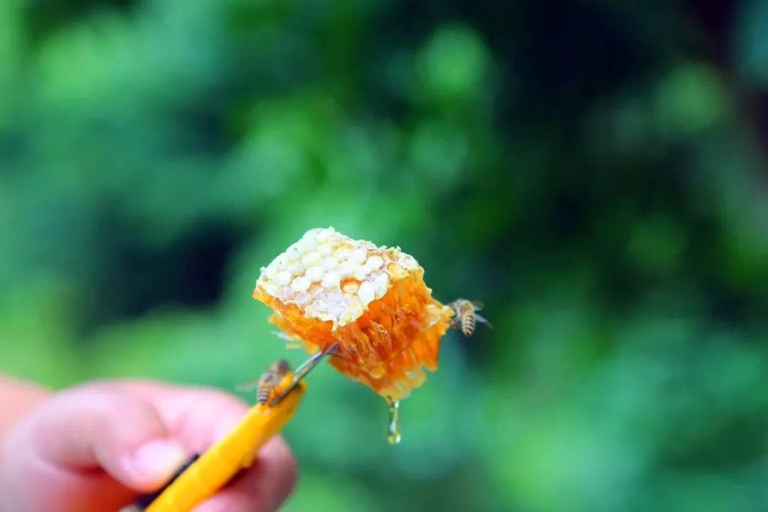"""【资讯】年均产蜜200吨以上 茅箭区获评""""中国蜂蜜之乡"""""""