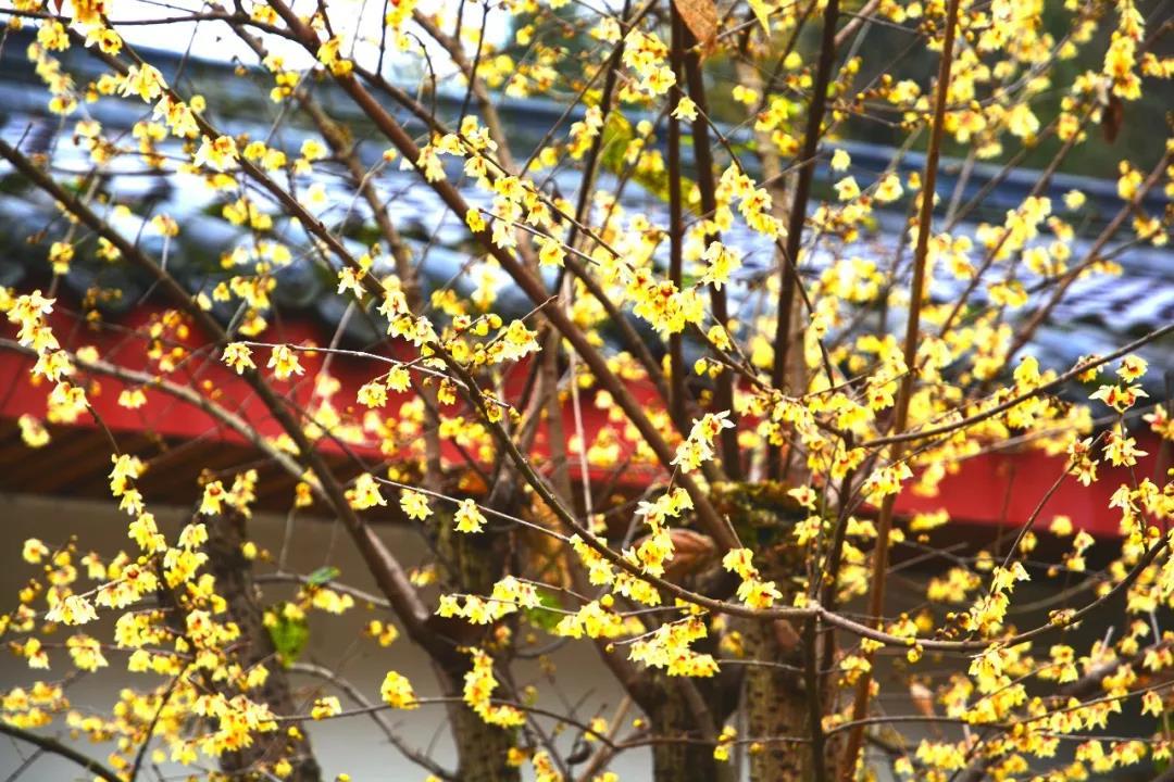 【资讯】春节近郊游,十堰这些地方好玩