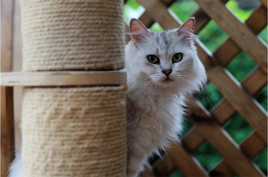【资讯】茅箭区首届撸猫节!这个周末必须约!
