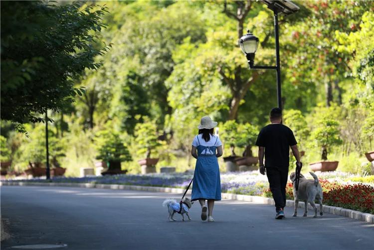 【资讯】茅箭遛狗旅游节启动,参与美图征集还有奖励!
