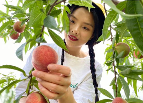 【资讯】竹山这里百亩桃园的桃子熟了,好甜!