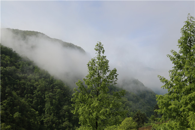 【资讯】一次在雨中的旅行:邂逅烟雨竹溪