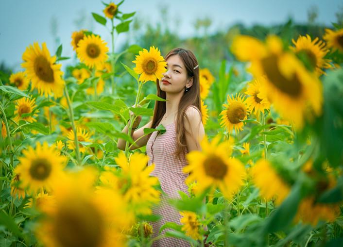 郧阳区近10亩向日葵花儿开了