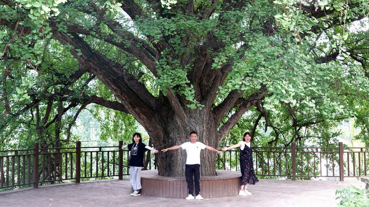 【资讯】惠游湖北 来大川浪溪古树群景区感受森呼吸