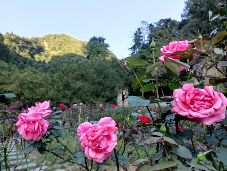 【资讯】惠游湖北|玩转东沟①赏花、登高、访古树...