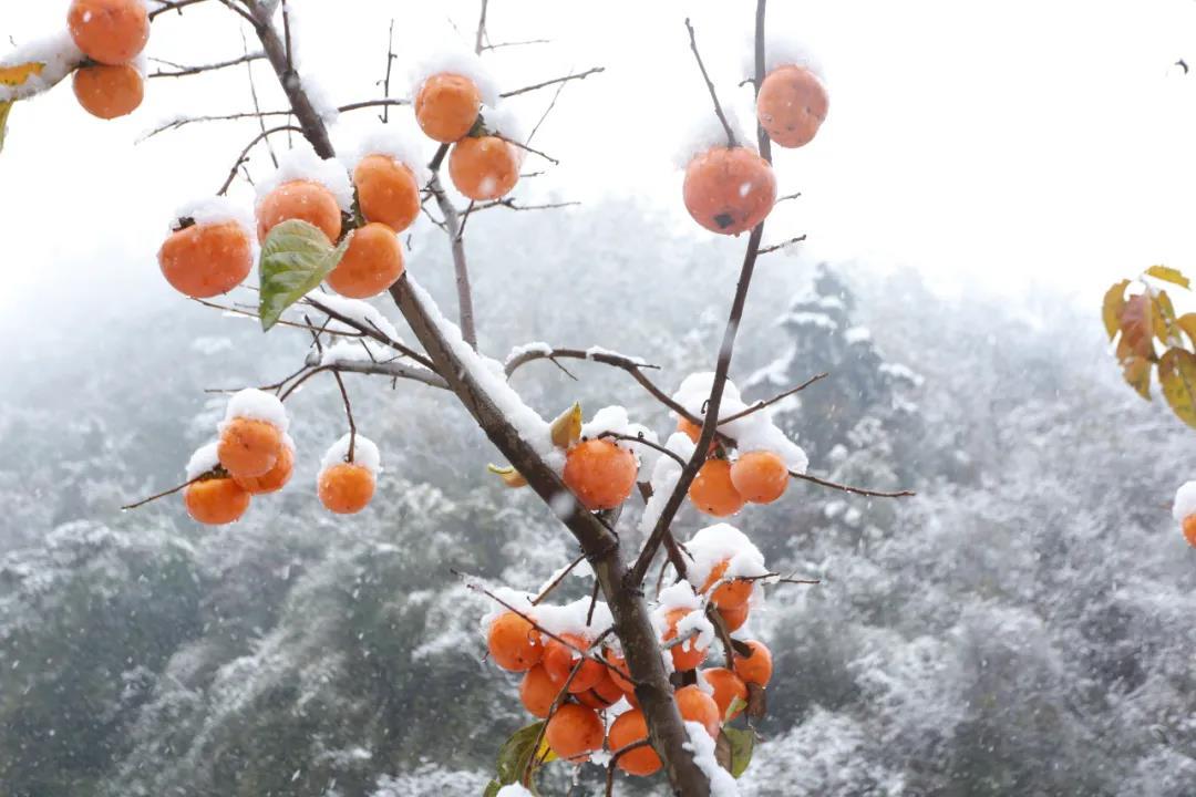 十堰初雪,茅箭南部山区美如画